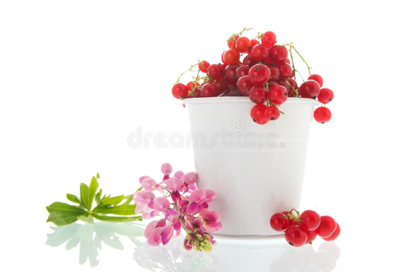 White bucket red currents. With yellow flowers royalty free stock photos