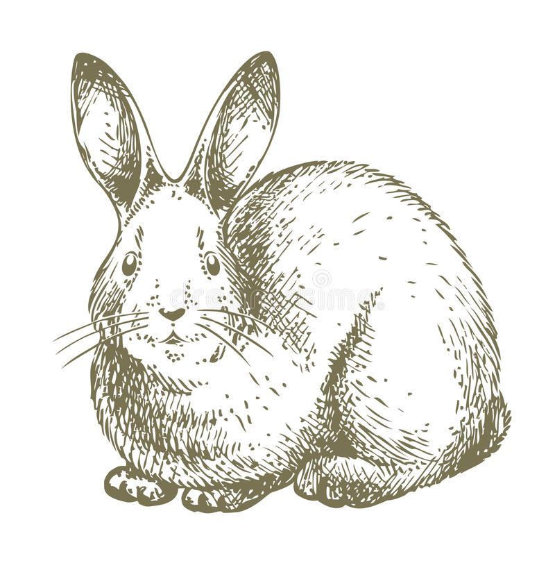 White bunny drawing. Vector hand-drawn illustration of a cute, small, white rabbit looking at a camera. The bunny is isolated on white background. Beautifully royalty free illustration