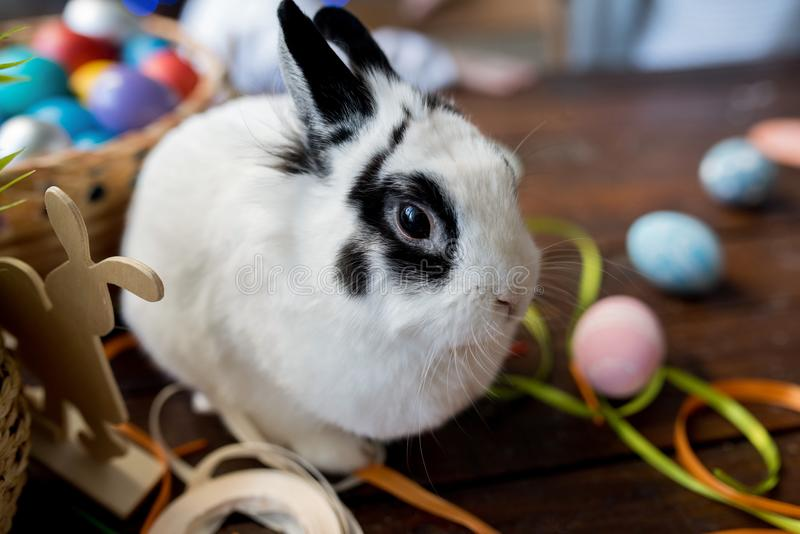 White Bunny on Easter Day. Pet portrait of cute white bunny sitting on wooden table decorated for Easter, copy space stock image