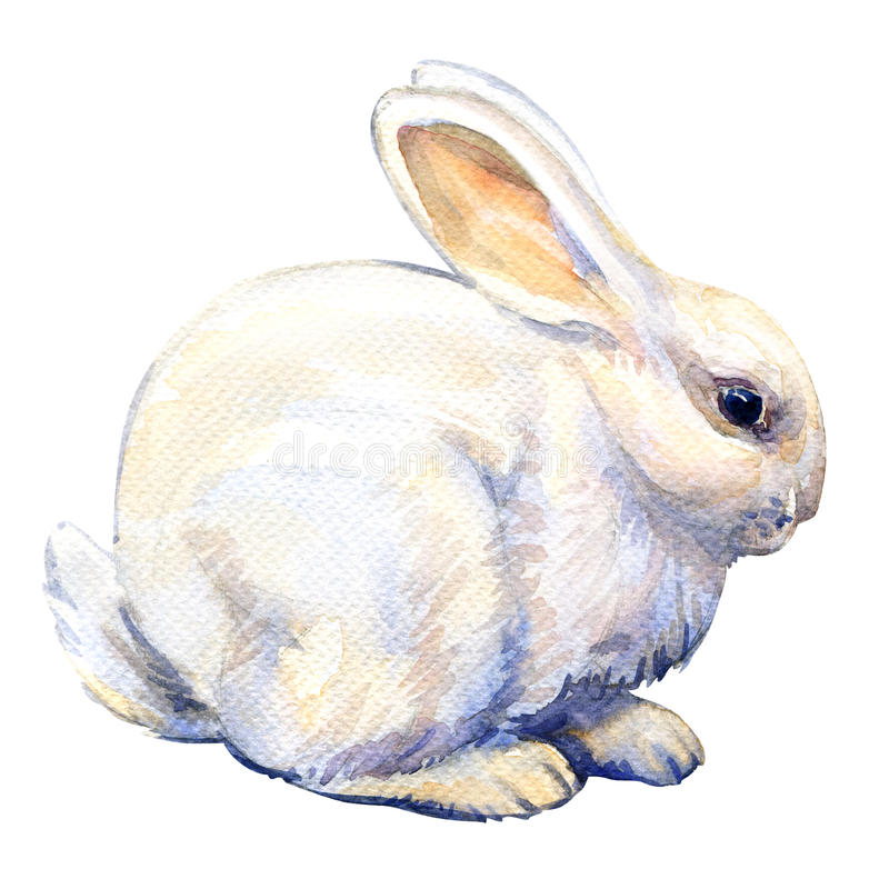 White bunny rabbit isolated, watercolor illustration. On white background royalty free illustration
