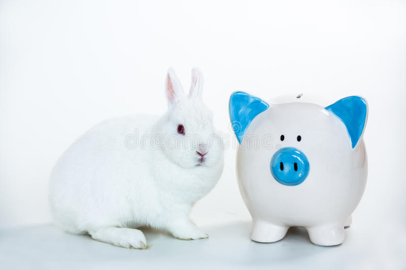 White bunny sitting beside blue and white piggy bank. On white background stock photo