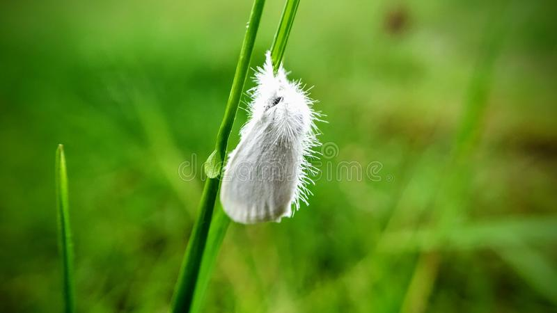 White butterfly closed his wings on grass. royalty free stock photography
