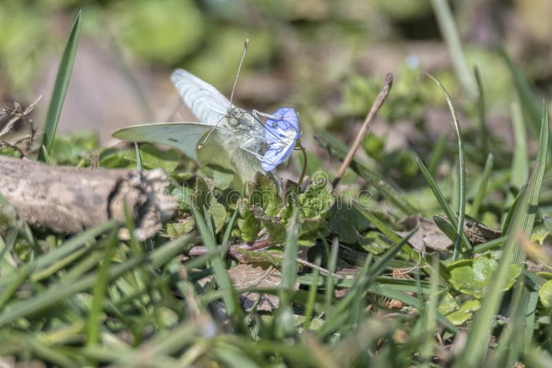 White butterfly on flower royalty free stock photos