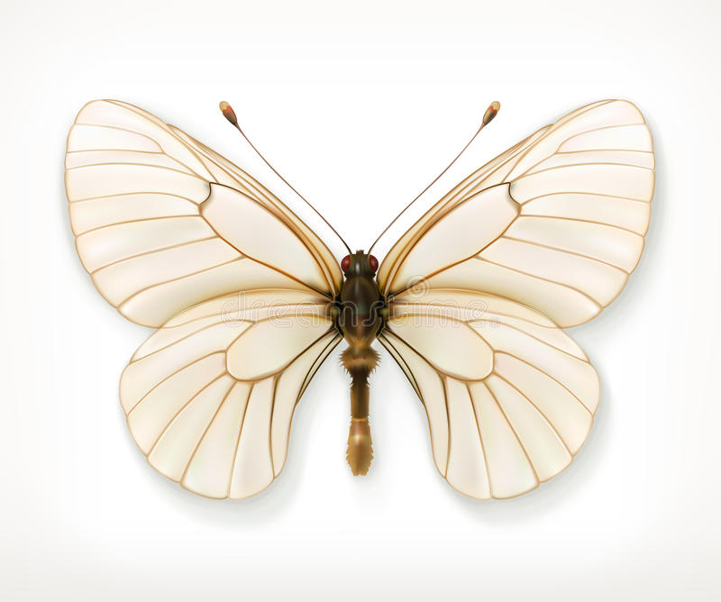 White butterfly icon stock illustration