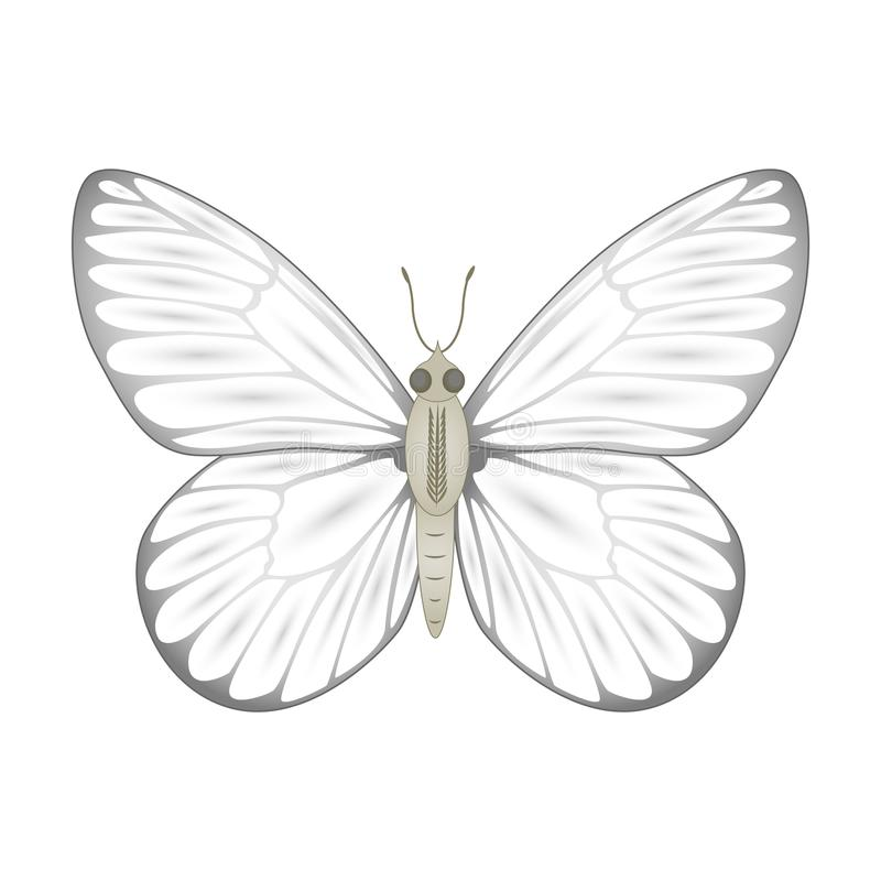 White butterfly vector illustration isolated on white backgroun vector illustration