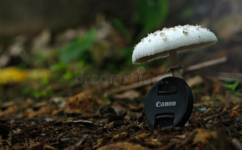 White Button Mushroom With Black Canon Camera Zoom Lens Cover stock photography