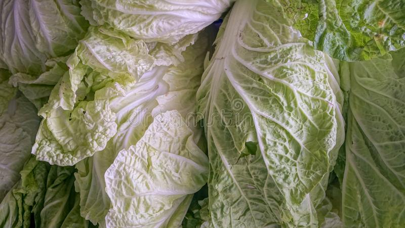 White cabbage, fresh vegetables are important foods for the body. White cabbage, fresh vegetables are important foods for the body royalty free stock photo