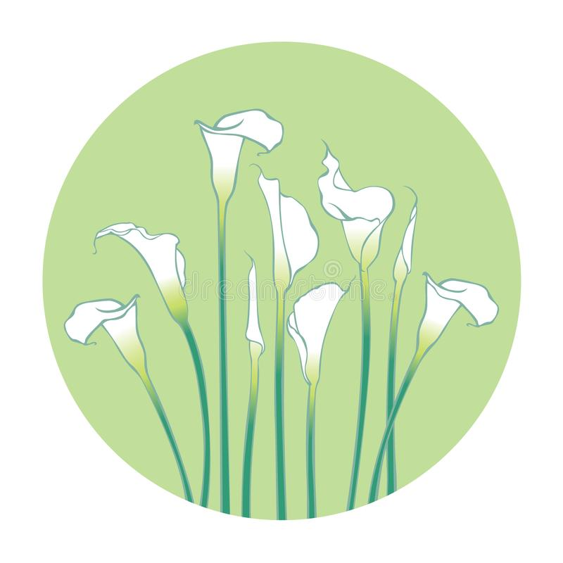 White calla lilies with leaves isolated on a green background. Lake plants. White calla lilies with leaves isolated on a green background. Beauty lake plants stock illustration