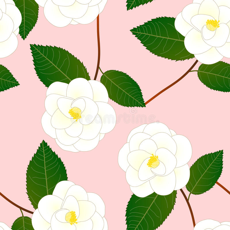 White Camellia Flower on Pink Background. Vector Illustration vector illustration