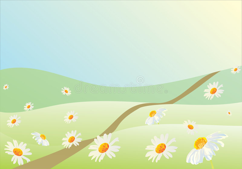 White camomile field. Illustration with white camomile field vector illustration