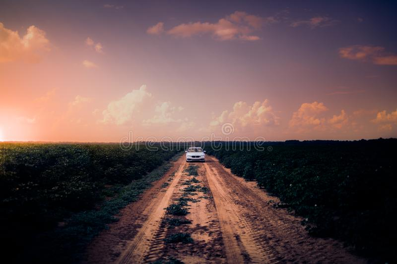 White Car on Dirt Road in the Middle of Grass Field stock images