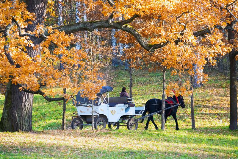 The white carriage with a black horse in the Park. Autumn landscape royalty free stock photo