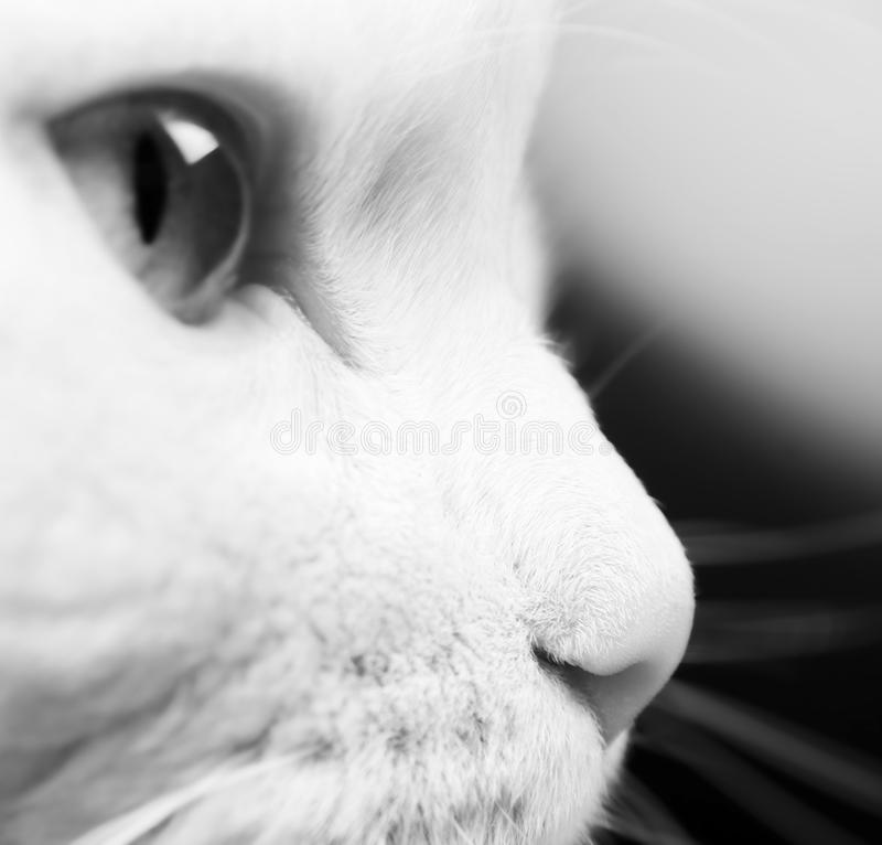 Download White cat stock image. Image of grey, fluffy, mustache - 12694143
