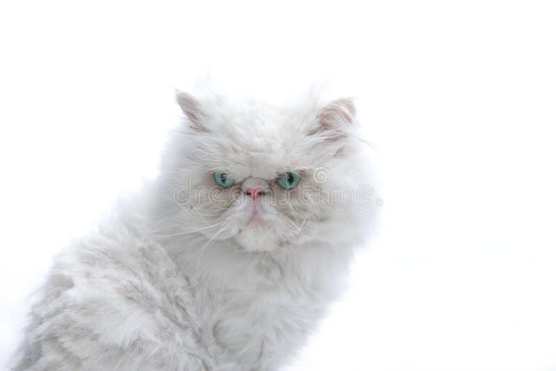 White cat. On white background stock photos
