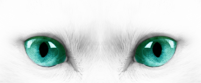 Download White cat stock photo. Image of portrait, look, feline - 15414110