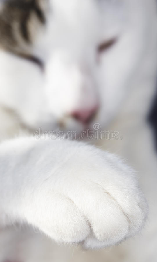 Download White cat stock image. Image of playful, adorable, cute - 17403415