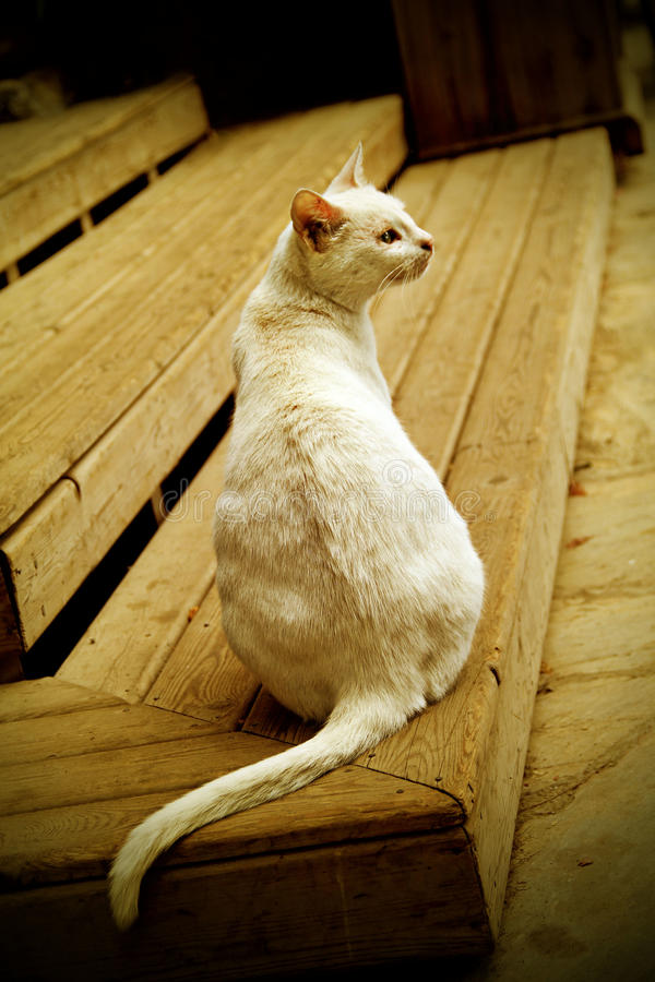 Download White cat stock photo. Image of lovely, feline, furry - 25126218