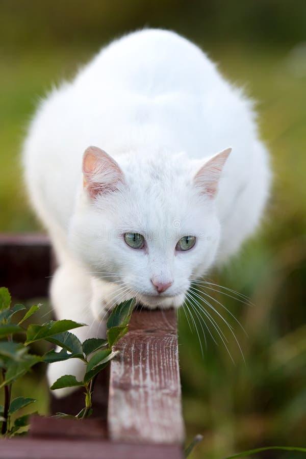 Download White cat stock photo. Image of white, kitten, hunt, plant - 27196046