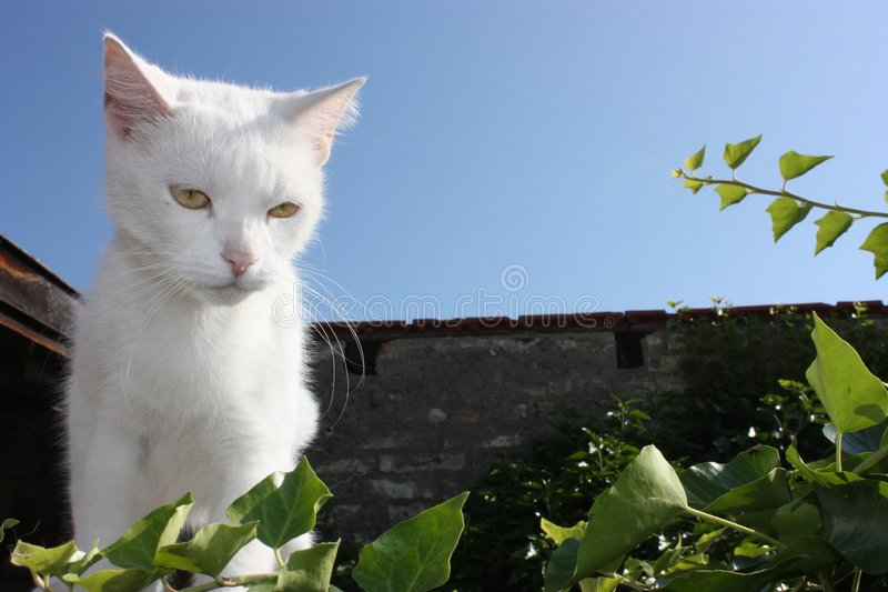 Download White cat stock photo. Image of cute, detail, leaves, white - 7895226