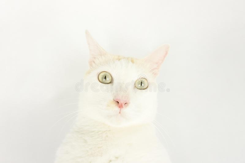 White cat with a white background stock photos