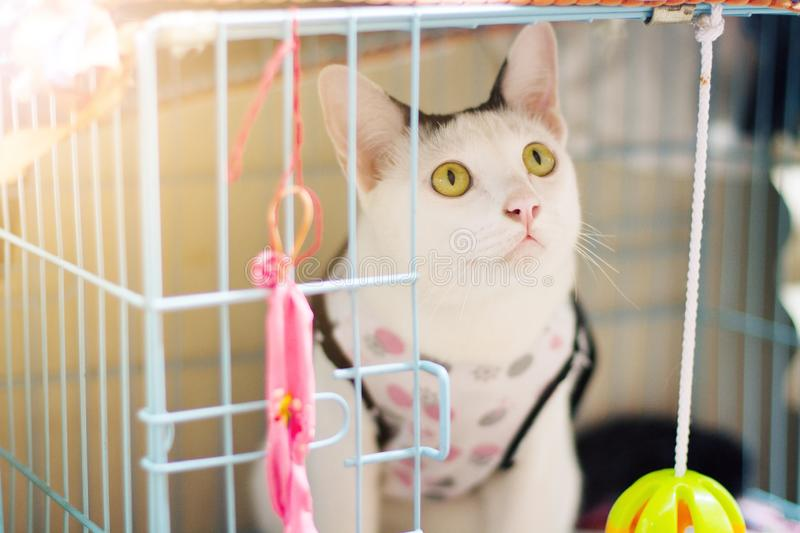White cat enjoy and sitting in cage box. With beautiful sunlight royalty free stock photos