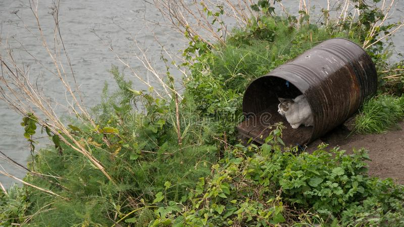 White cat finds shelter from rain in old metal barrel. On banks of River Douro in Porto, Portugal royalty free stock image