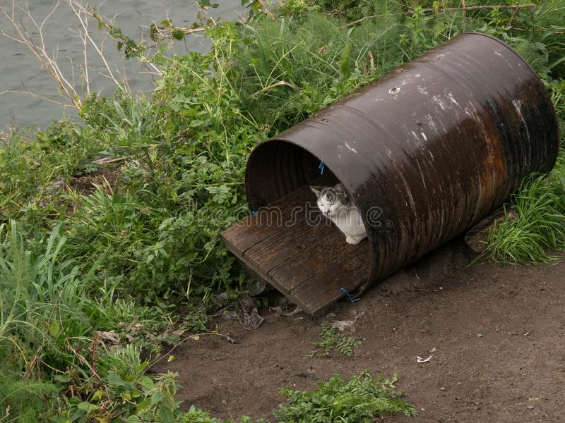 White cat finds shelter from rain in old metal barrel. On banks of River Douro in Porto, Portugal stock photography