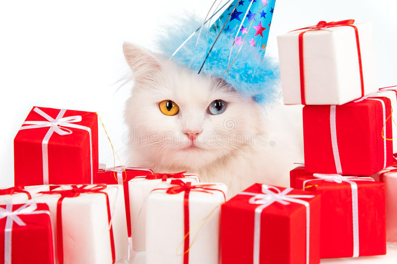 White Cat With Gifts Royalty Free Stock Photography