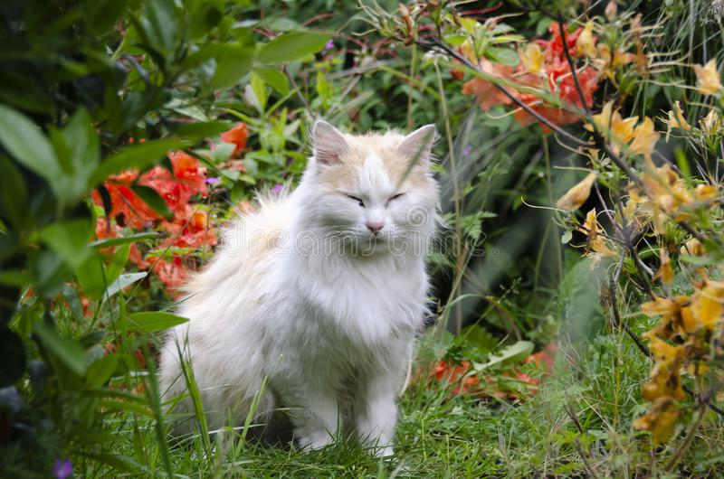 White cat in the green with flowers stock image