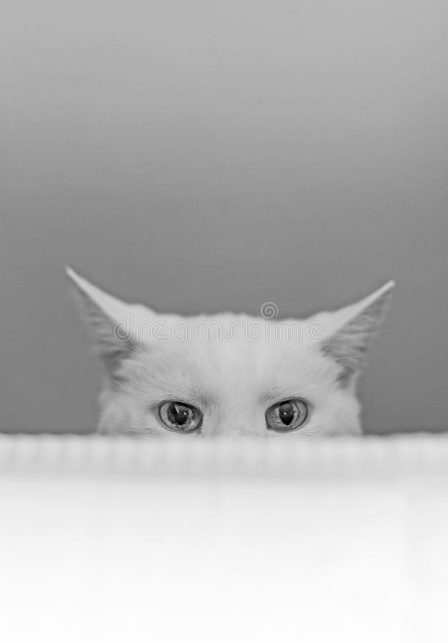 Free White Cat Hiding. Royalty Free Stock Photo - 52519405
