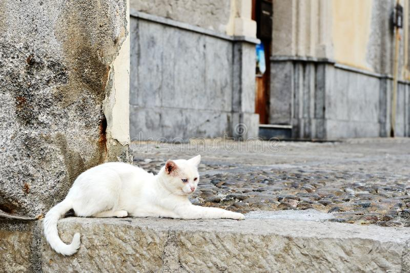 White cat lies on a stone step on the street. Of the old city stock photography
