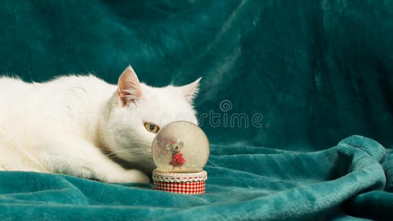 White cat is lurking behind a crystal snowball. Selective focus. royalty free stock photos