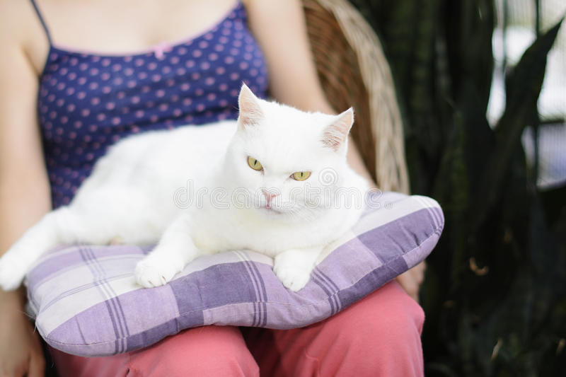 White cat lying on the pillow. Selective focus. royalty free stock photo
