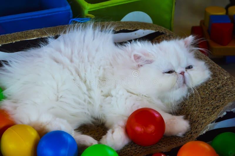 White Cat Lying stock photo
