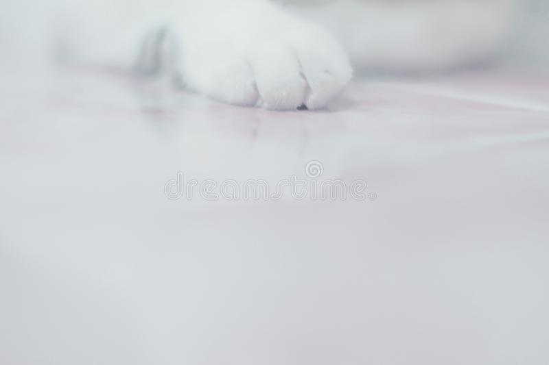 White Cat paws, close-up, full-frame shooting .copy space abstract pet animal background stock images