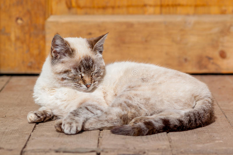 White cat on the porch. royalty free stock image