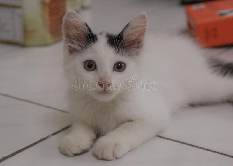 White Cat Relaxing stock photos