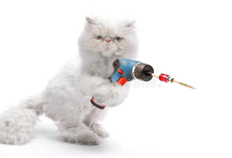 White cat with screwdriver royalty free stock photography