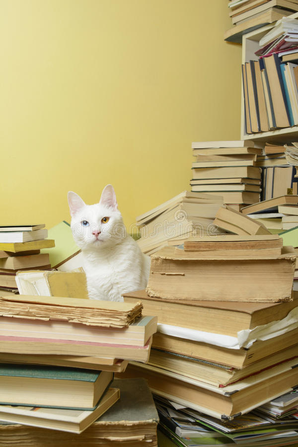 White cat standing among a pile of books. Selective focus. White cat with heterochromia iridum standing among a pile of books. Selective focus royalty free stock images