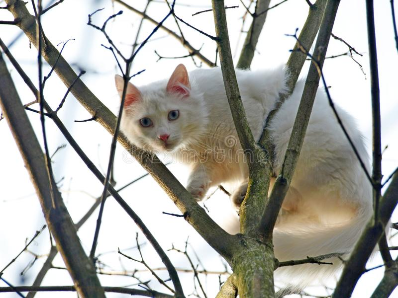 white cat in a tree stock photography