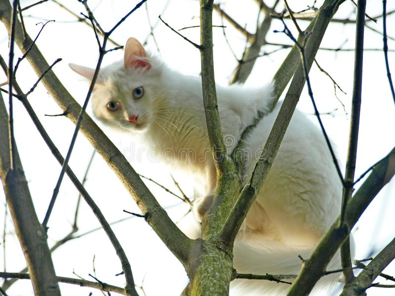 white cat in a tree royalty free stock images