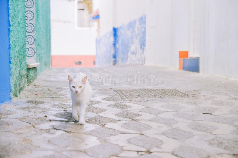 A white cat walks on alley royalty free stock photo