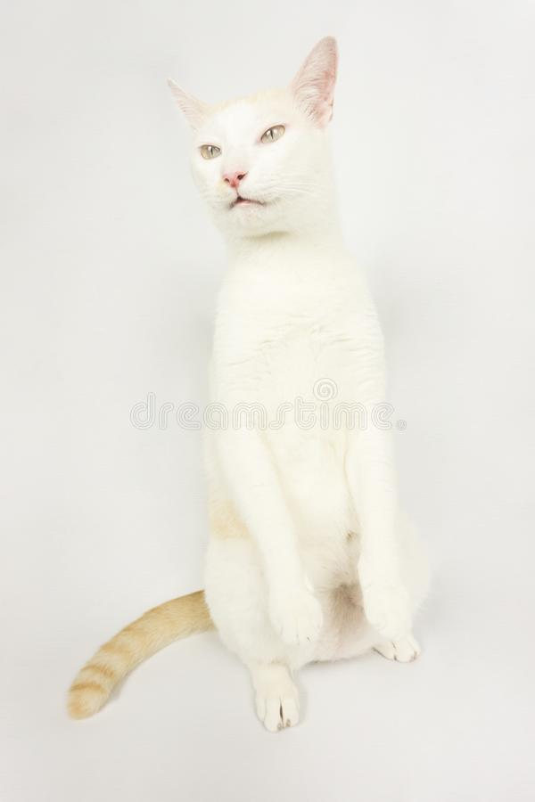 White cat with a white background stock photo