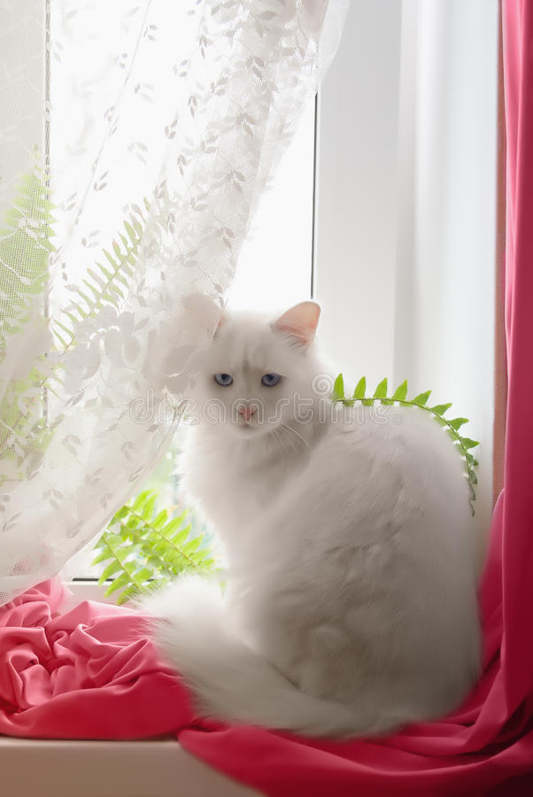 Download White cat on the window stock photo. Image of isolated - 17283936