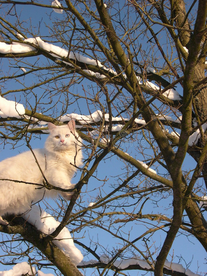 White cat and winter tree stock photography