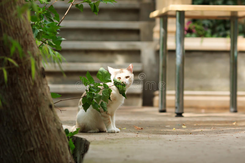 White cat in the yard stock photos