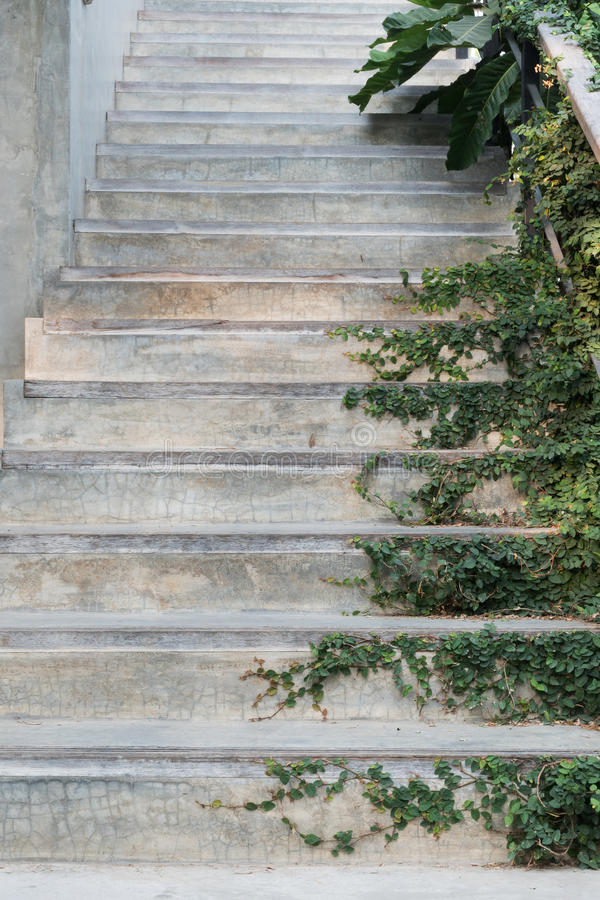 White cement stairs covered green leaves ivy plant. greenery house home decoration design idea. royalty free stock photography