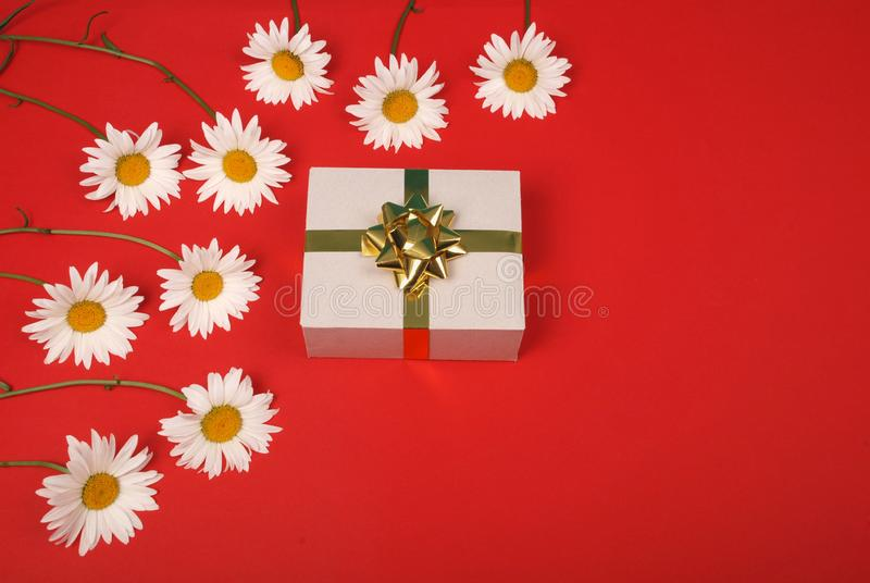 White chamomile with gift box with gold ribbon bow. Gift for birthday valentine or mothers day royalty free stock images