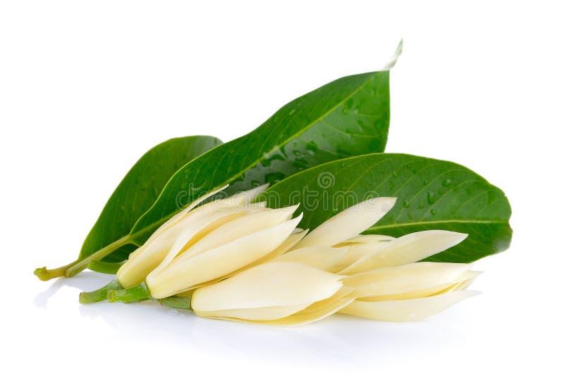 White Champaka. On white background stock photography