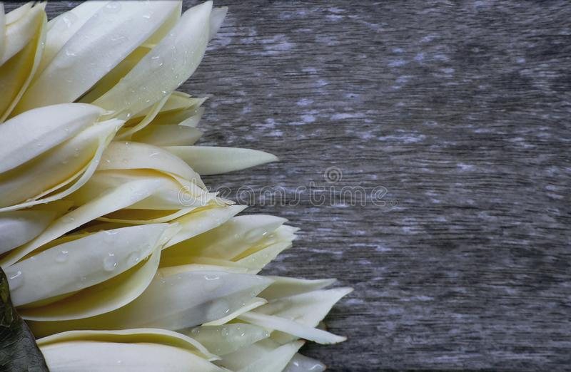 White Champaka flower Bouquet or Michelia alba. have smells aroma Placed on the old wooden floor.  royalty free stock image